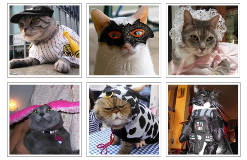 68 Cats in Costumes for Halloween